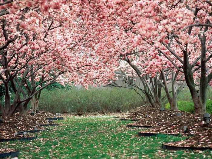 Spring_Persian-Star.org_23